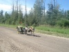 Tocht van 1000 km van Calgary naar Edmonton